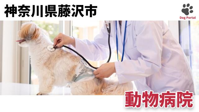 藤沢市の動物病院