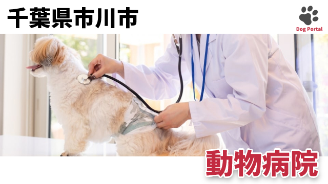 市川市の動物病院