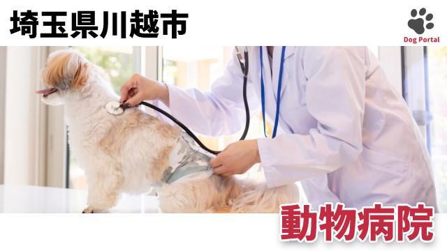 川越市の動物病院
