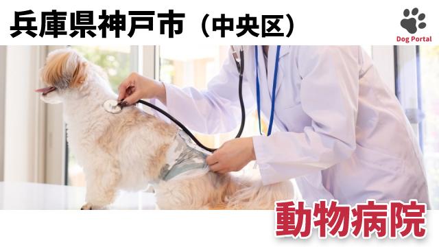 神戸市中央区の動物病院