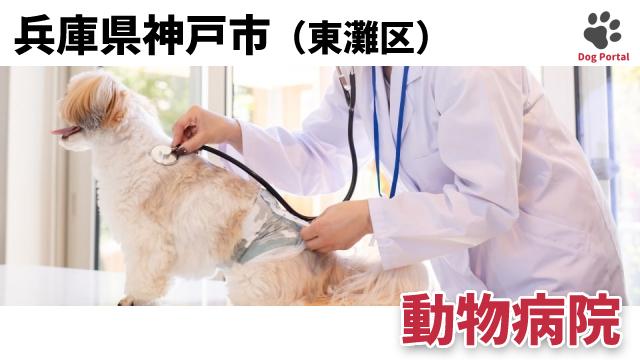 神戸市東灘区の動物病院