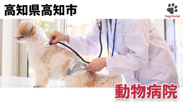 高知市の動物病院