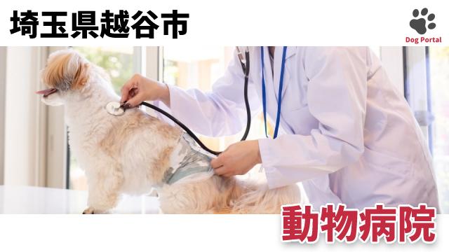 越谷市の動物病院