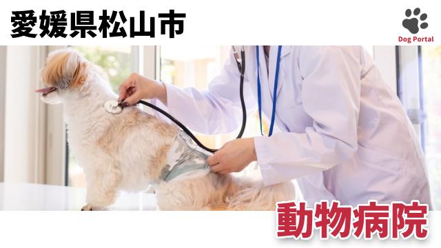 松山市の動物病院