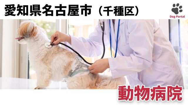 名古屋市千種区の動物病院