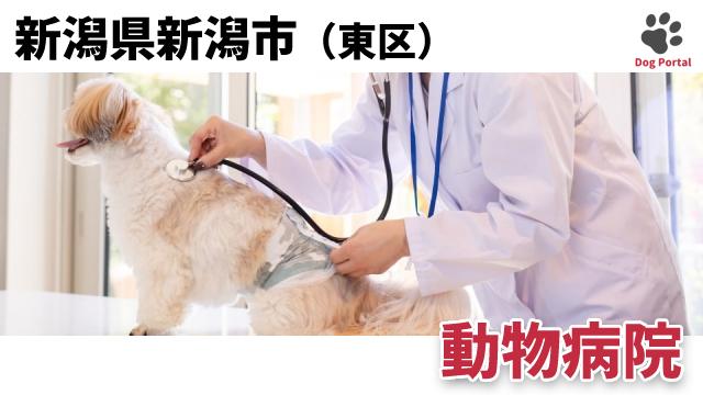 新潟市東区の動物病院