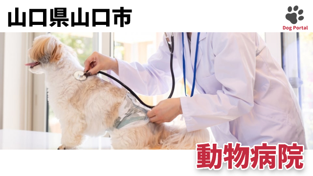 山口市の動物病院