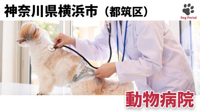 横浜市都筑区の動物病院