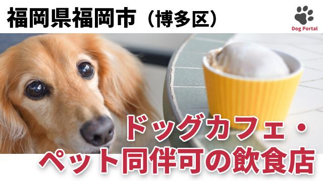 福岡市博多区のドッグカフェ