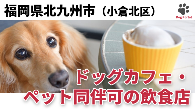 北九州市小倉北区のドッグカフェ