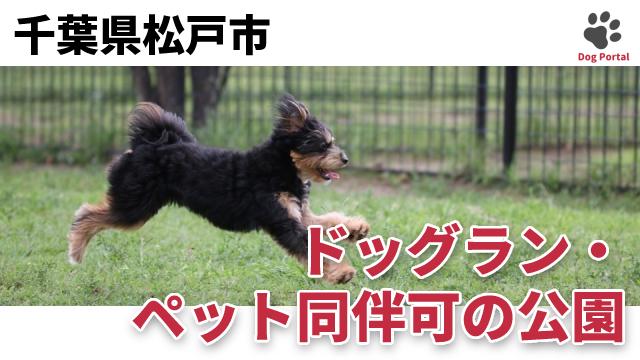 松戸市のドッグラン・公園