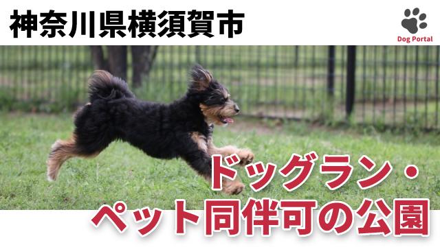 横須賀市のドッグラン・公園
