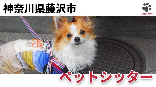 藤沢市のペットシッター