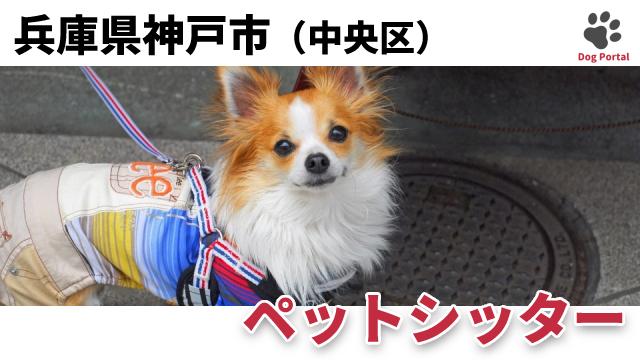 神戸市中央区のペットシッター