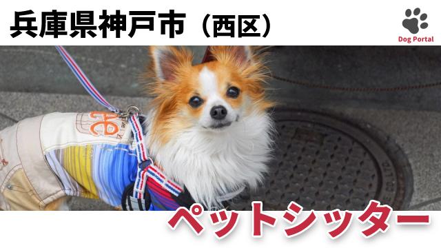 神戸市西区のペットシッター