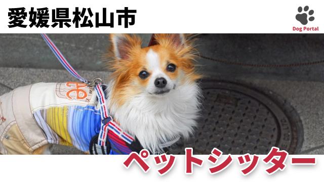 松山市のペットシッター