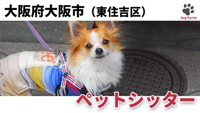 大阪市東住吉区のペットシッター