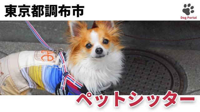 東京都調布市のペットシッター